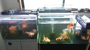 金魚水槽の最新動画♪♪ - ~today's memory~