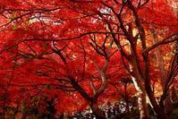 ■【デジブックムービー】にて紅葉狩り 11月18日【大山阿夫利神社/大山寺/昼食】など♪ - 「料理と趣味の部屋」