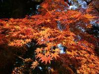 東京都内も紅葉だ - 水ルポ