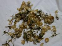 『植物のタネは、その袋も美しい〜』 - NabeQuest(nabe探求)