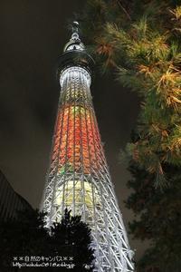 東京スカツリ-のライトアップを楽しむ!!! - 自然のキャンバス