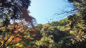 布引~修法ガ原~太師道紅葉に染まる散策路 - 例会報告