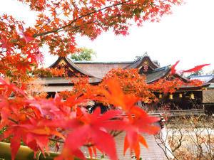 今日は、京都の北野天満宮へ - 日々の写真