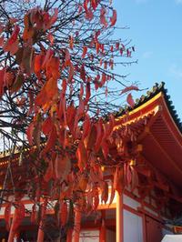 京都の紅葉狩り(4) 平安神宮辺り - ご無沙汰写真館