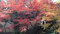 畠山記念館庭園 秋の紅葉 - 歴史と、自然と、芸術と