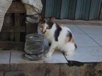 インドネシアの猫 - いつもの空の下で・・・・
