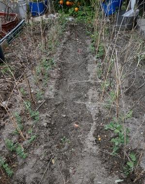 あまった苗でプランター栽培@ソラマメと玉葱 - ブルーベリーの育て方& 栽培 ブルーベリー ノート BlueBerryNote