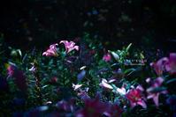 夏の一枚 - Sora*Koto