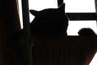 シルエットクイズ - ぎんネコ☆はうす