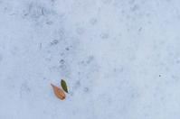 12月4日 今日の写真 - ainosatoブログ02