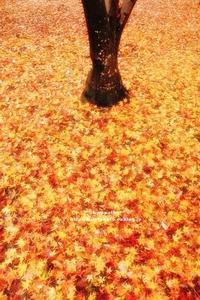 秋の雨 - ** shympathy **