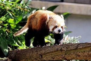 「キンタ」と「ケンケン」 - 動物園放浪記
