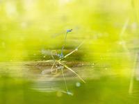 広島市森林公園昆虫館 第5回むしむし写真コンテスト入選 - オヤヂのご近所仲間日記