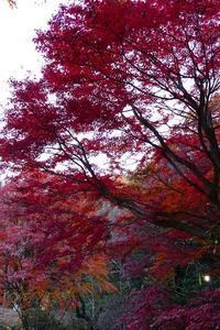 秋の筑波山 その7 - 季節(いま)を求めて