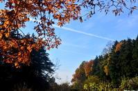 11月の森(フユシャク、蔦紅葉) - つれづれ日記