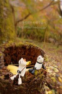 秋の午後 - 日々の欠片を紡ぐ日々