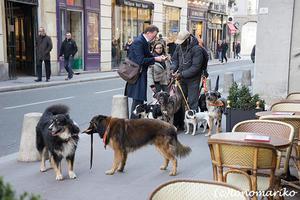 イヌがイヌの散歩をする?! - パリときどきバブー  from Paris France