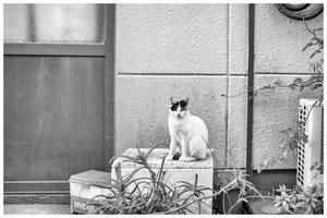 仲良くなれた猫 - BobのCamera