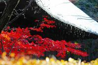 2016平林寺の紅葉-5 - 自然と仲良くなれたらいいな2