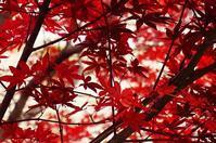 ◆バタバタ地元の紅葉風景・・・遠出したかったなぁ~(* ̄― ̄) - ☆彡ちいさな幸せ☆彡別館