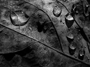 雨上がりの手紙 - スズキヨシカズ幻燈画室