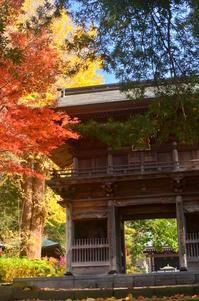 瀬谷区徳善寺の紅葉 - つれづれ日記
