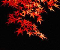 紅葉2 - 光 塗人 の デジタル フォト グラフィック アート (DIGITAL PHOTOGRAPHIC ARTWORKS)