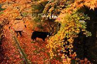 池の周りをぐるっと紅葉散歩♪(今高野山龍華寺で紅葉狩り④) - Reon&Roses+Lara