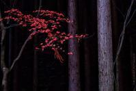 Peace of mind. - [EST.] Jun Iimura Photography