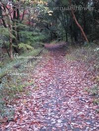 落ち葉の散歩道 - 風と花を紡いで