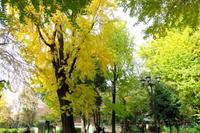 紅葉の上野東照宮 - ニッキーののんびり気まま暮らし
