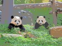 パンダの赤ちゃんは『結浜』と命名されました! - さして意味なし、面白くもなし