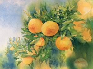 しんごのみかん園さんへ - ポッと出っスけど杉山ひとみ/水彩画ブログ