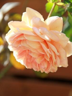 ◆やっぱりバラが好き! - Soleilの庭あそび・・・布あそび♪