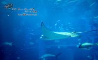 夏だ!!大阪 夢いっぱいの世界 USJ・海遊館 -Vol.07- - フユビヨリ