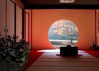 初冬の鎌倉 明月院 - 暮らしを紡ぐ