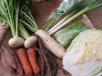 今週の野菜セット 12月2週目 - まるみど農園のあれこれ日記