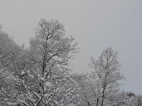 雪景色 - 小さなお庭のある家
