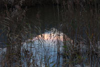 葦原の朝 - 但馬・写真日和