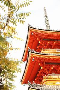 美しき京の旅 - My time…5人の天使と