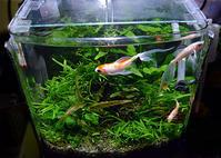 筆録(ひつろく)金魚水槽。。。 - Trial and Error → Aquarium