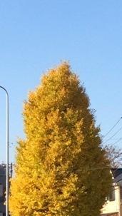 12月の木 - アトリエ グラスバード: ガラス工芸教室・スタッフブログ
