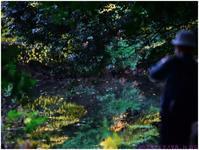 銀杏日和 (3) - ぶらぶらデジカメ写真 by はる