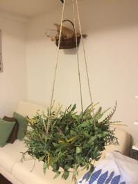 お昼ごはんは法蓮草とベーコンのパスタで・・・12/7 - vegechi
