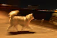 今日も満足げです♪ (^o^) - 犬連れへんろ*二人と一匹のはなし*