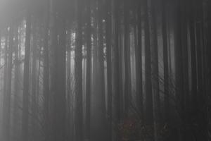 霧林 - 四季集