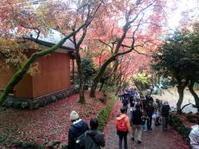 滋賀県の鶏足寺に行ってきました - ざっかラボ九隆庵 創作事情