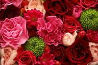 大好きな薔薇 - しあわせ色のスケッチ