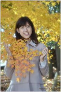 紅葉と落葉 - caetla