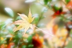 紅葉 - 自然を楽しもう